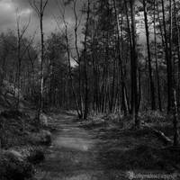 The forest III by CountessBloody