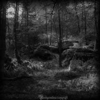 The forest VI by CountessBloody
