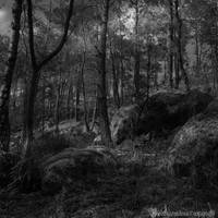 The forest VIII by CountessBloody