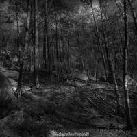 The forest IX by CountessBloody