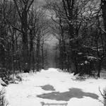 Winter II by CountessBloody