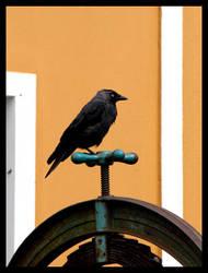 A raven by Nymphadora79