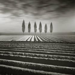 .tree. by MichalGiedrojc