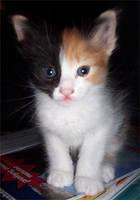 Favourite kitten by azzza