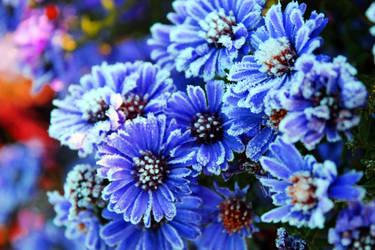 Frozen flowers by monikaskucha