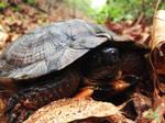 Nervous Turtle by Sir-Isac-Vanillabean