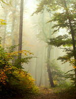 fairy wood by losgeloest