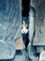 Kitten by Chayenne1991
