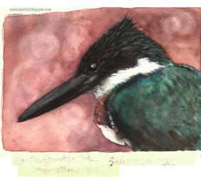Amazon Kingfisher / Martim-pescador-verde by danfs85