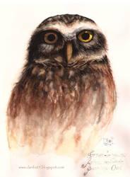 Burrowing Owl / Coruja-buraqueira by danfs85