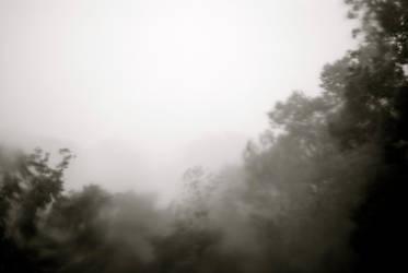 jungle by Lahav