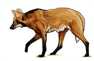 Maned Wolf by daidaishar