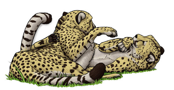 young cheetahs by daidaishar