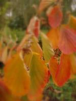 When autumn is walking by waterfallheart