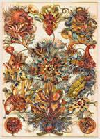 Haeckel Variation 14 by james119