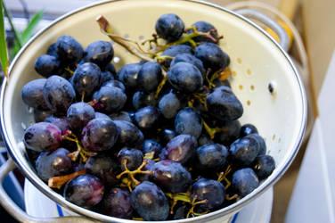Harvest Fruit06 by amethystmstock