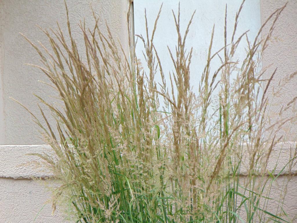 Grass 001 by amethystmstock