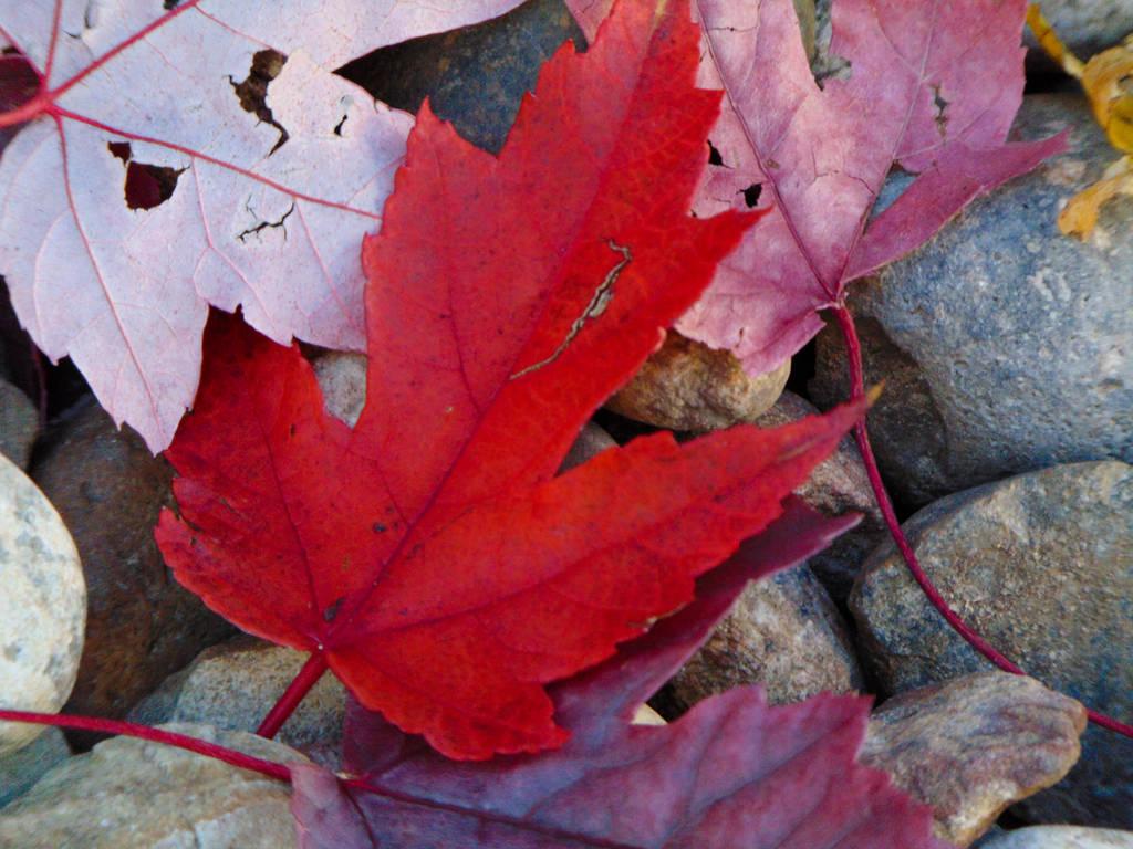 Colorful Dancing Leaves 002 by amethystmstock