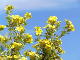 Wildflowers  Mix  001 by amethystmstock