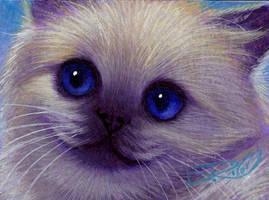 Mini Himalayan Kitten Portrait by carefulwhatyawishfor