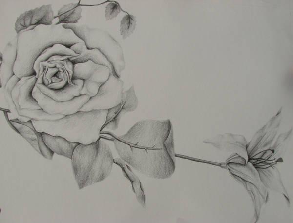 Flowers by KelleyArline