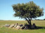 Tree in Portugal Alentejo by zerplon