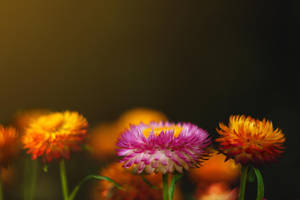 flowers* by Teyvilin