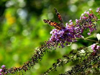 Butterfly 1 by Bethy-Go-Blah
