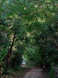 Lost Trail by Bethy-Go-Blah