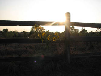 Country Sunflower Sunet by Bethy-Go-Blah