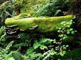 Lakeland Fungi by IRIS-KUPP
