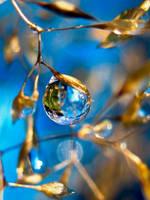 Gold Leaf by IRIS-KUPP