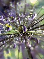 Purple Haze by IRIS-KUPP