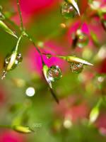 Summer Rain by IRIS-KUPP