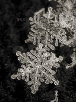 SNOWFLAKE 3 by IRIS-KUPP