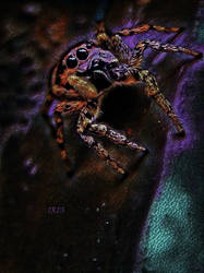 Spider in the Night by Iris-cup