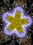 Kaleidoscope 1 by IRIS-KUPP