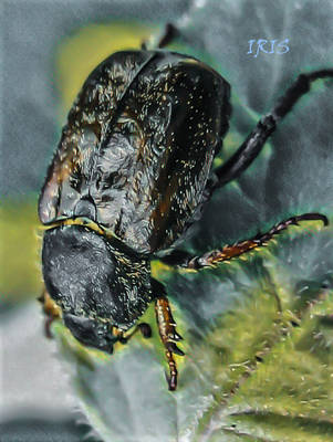 Black Beetle by IRIS-KUPP