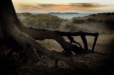 Roots by Ultimatum0