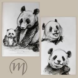 Panda by KaworuN