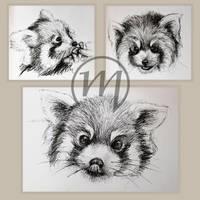 Red Panda Sketches by KaworuN