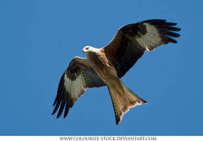 Bird 2 by Colourize-Stock