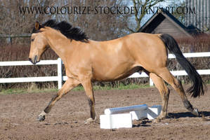 Warmblood 1 by Colourize-Stock