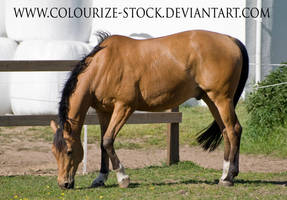 Warmblood 2 by Colourize-Stock