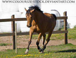 Warmblood 3 by Colourize-Stock
