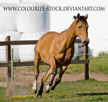 Warmblood 4 by Colourize-Stock