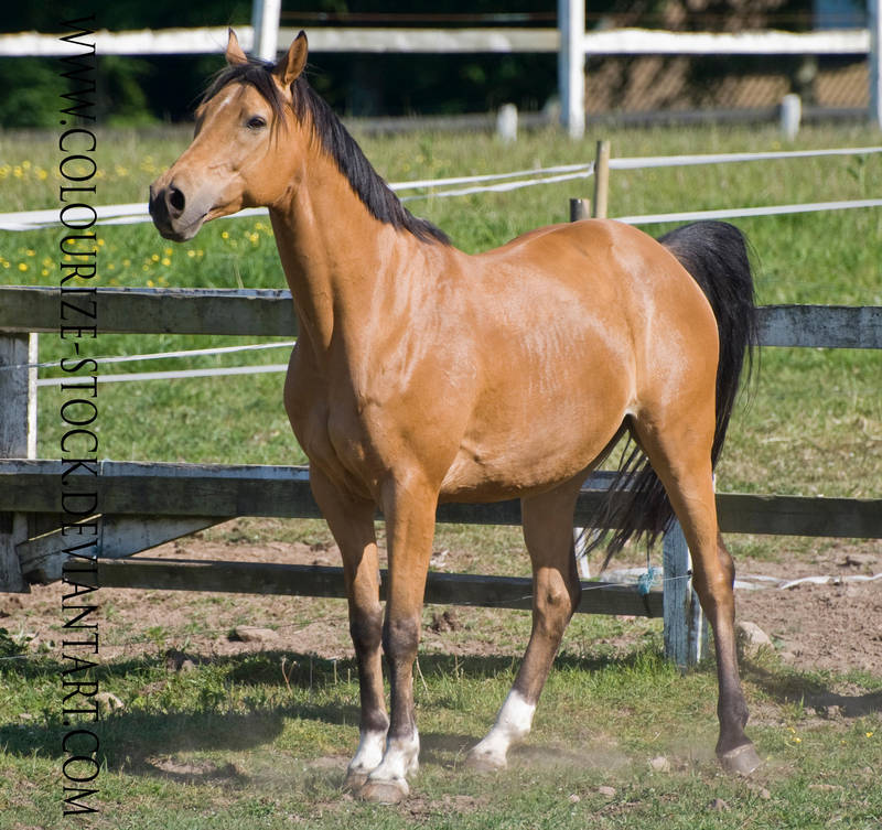 Warmblood 6 by Colourize-Stock