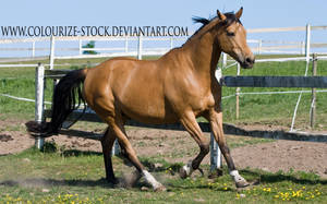 Warmblood 7 by Colourize-Stock