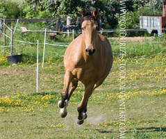 Warmblood 8 by Colourize-Stock