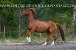 Standardbred 3 by Colourize-Stock